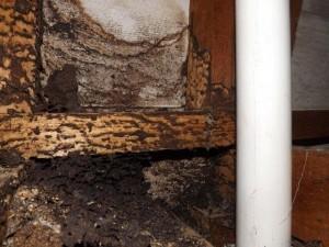 termite-activity