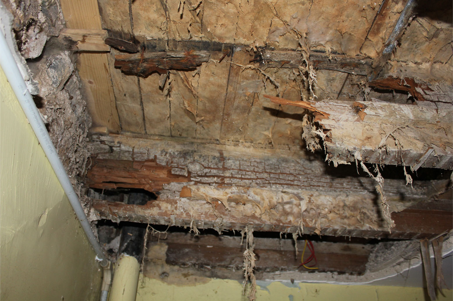 Timber Rot And How It Affects Your Property Houspect