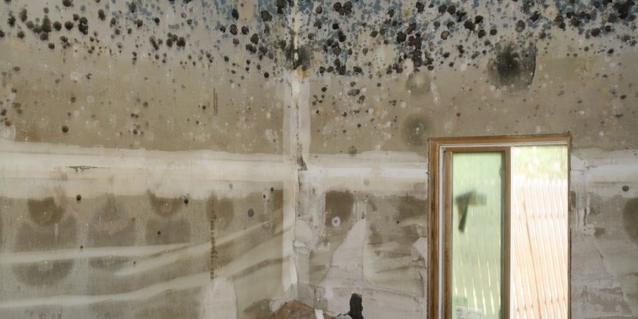 Water Ingress - Ventilation - Mould in WA Apartments and
